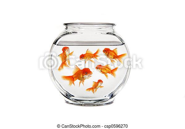 goldfish, muitos, bacia peixes, natação - csp0596270
