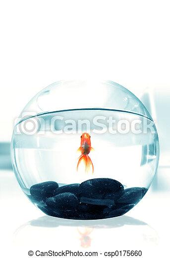 Goldfish - csp0175660