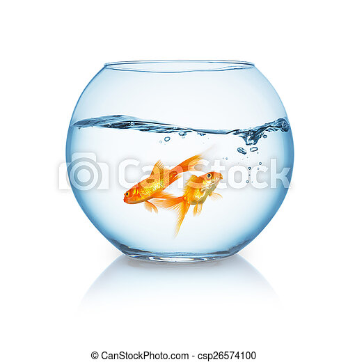 goldfishes swims in a fishbowl - csp26574100