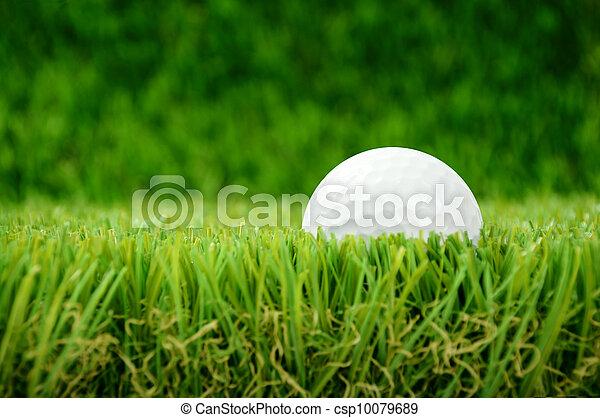 golf ball in grass - csp10079689