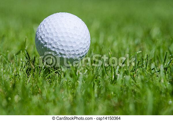 golf ball in grass - csp14150364
