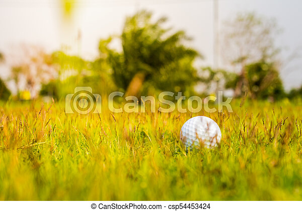 Golf ball on the green - csp54453424