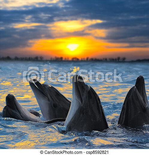golfinhos - csp8592821