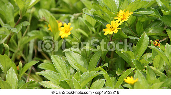 Good looking small yellow flowers on a bush with lush green leaves good looking small yellow flowers on a bush with lush green leaves csp45133216 mightylinksfo