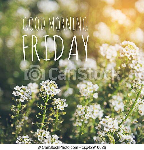 Good Morning Friday Over Blur Flower Background With Sun Light
