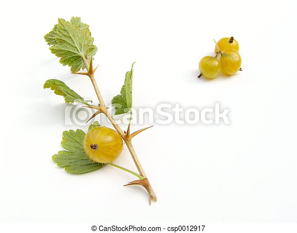 Gooseberries - csp0012917