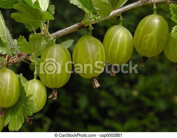 Gooseberry - csp0002881