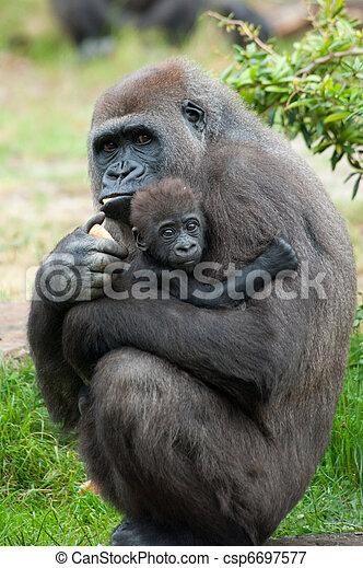 Gorila y su bebé - csp6697577