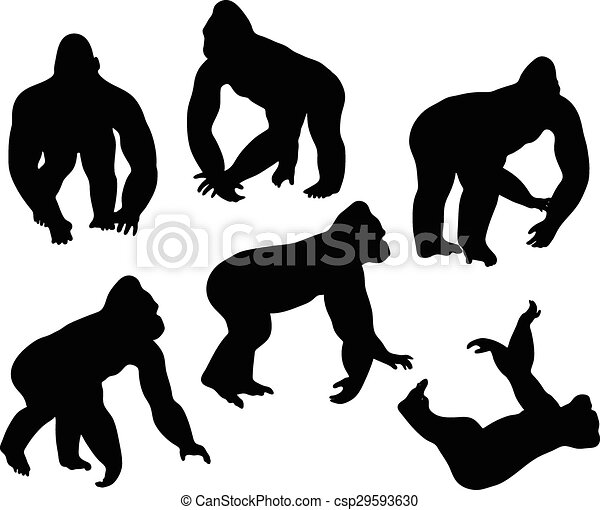 Vector image - gorilla...