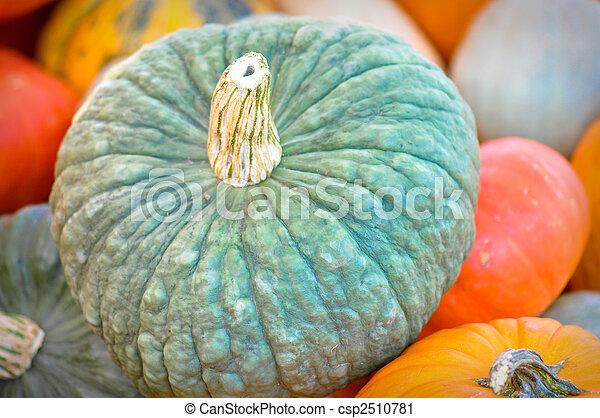Gourd - csp2510781