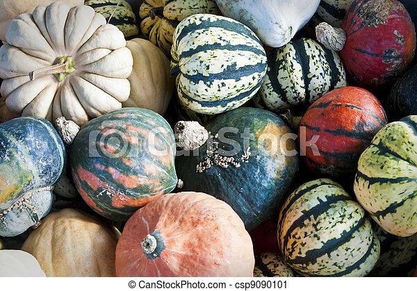 Gourds - csp9090101