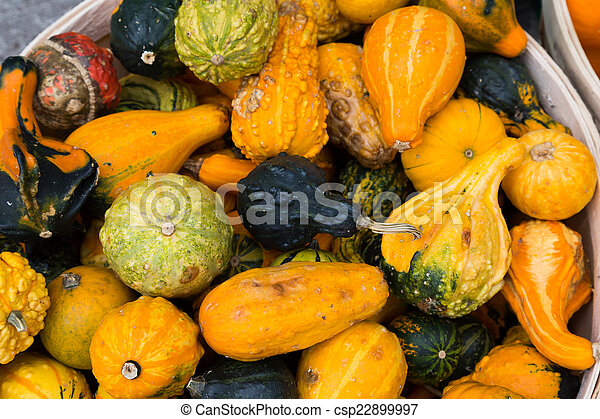 Gourds - csp22899997