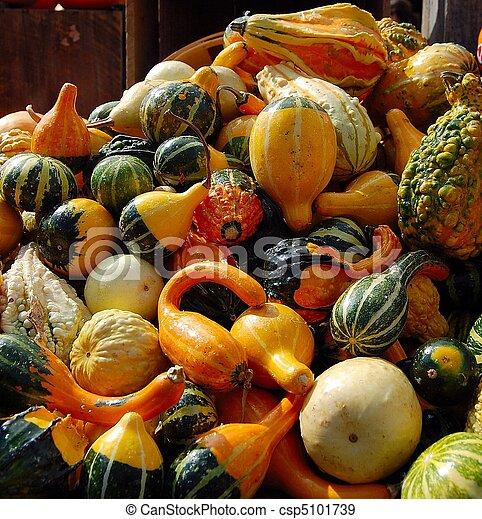 gourds - csp5101739
