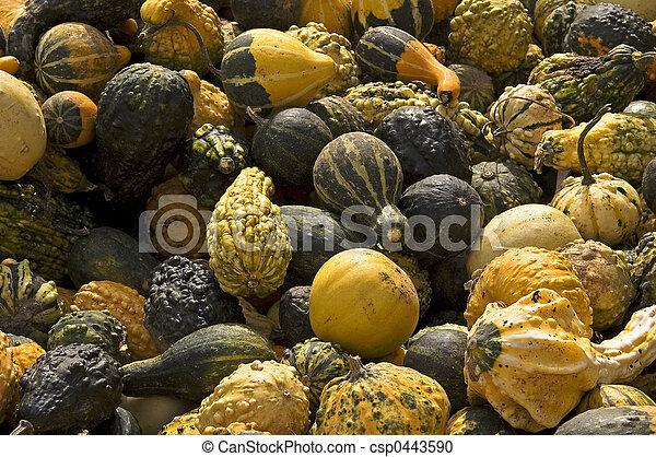 Gourds - csp0443590
