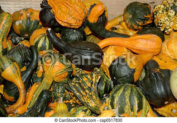 Gourds - csp0517830