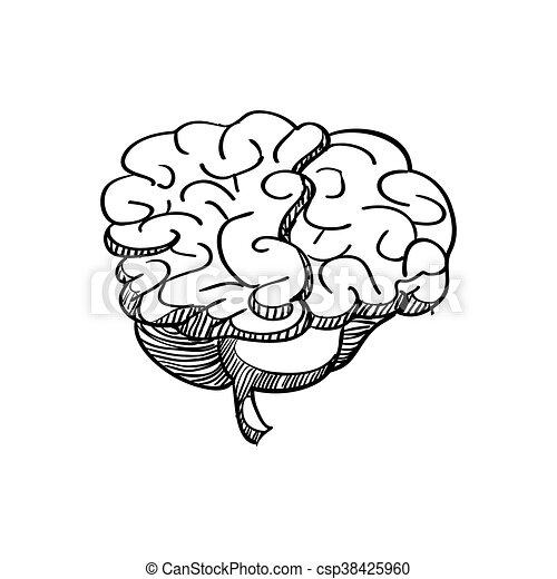 Gráfico, órgano, cerebro, vector, humano, icon., design.... vector ...