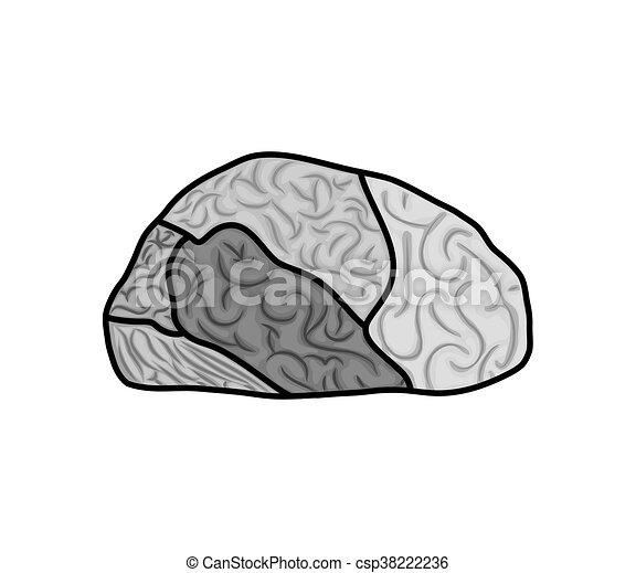 Gráfico, órgano, cerebro, vector, humano, icon., design.... vectores ...