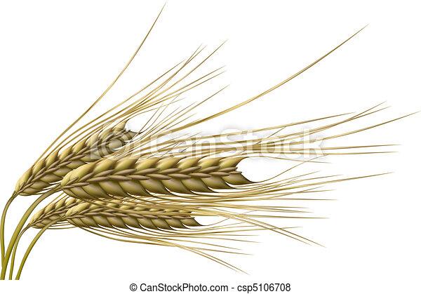 grão trigo - csp5106708