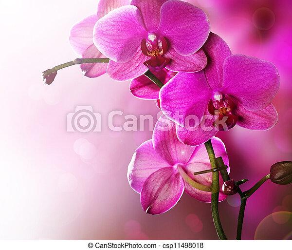 gräns, blomma, design, orkidé - csp11498018