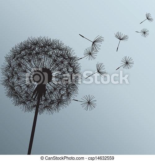 grå, blomma, bakgrund, maskros - csp14632559