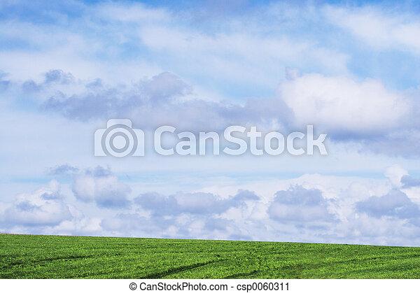 græs, himmel - csp0060311
