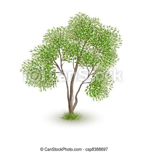 grön, vektor, träd, realistisk - csp8388697