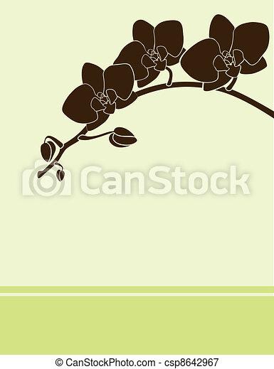 grün, karte, orchidee - csp8642967