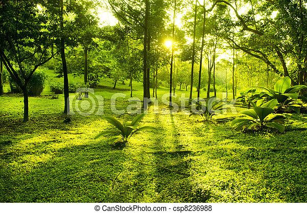 grüner park, bäume - csp8236988