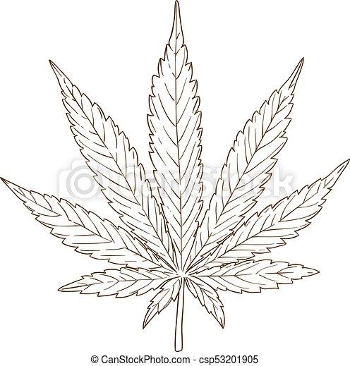 Grabado hoja cannabis dibujo ilustraci n antig edad grabado hoja aislado ilustraci n - Dessin feuille cannabis ...