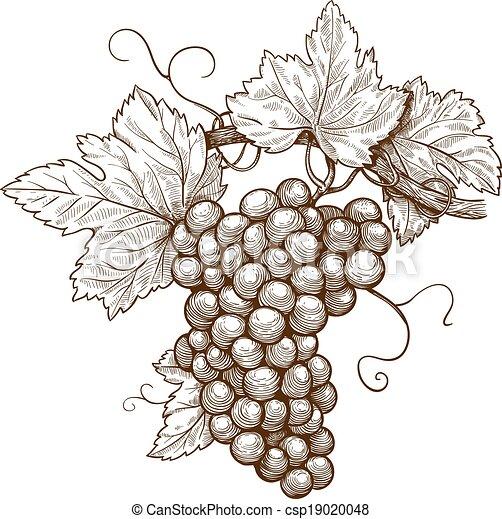 Grabando uvas en la rama - csp19020048
