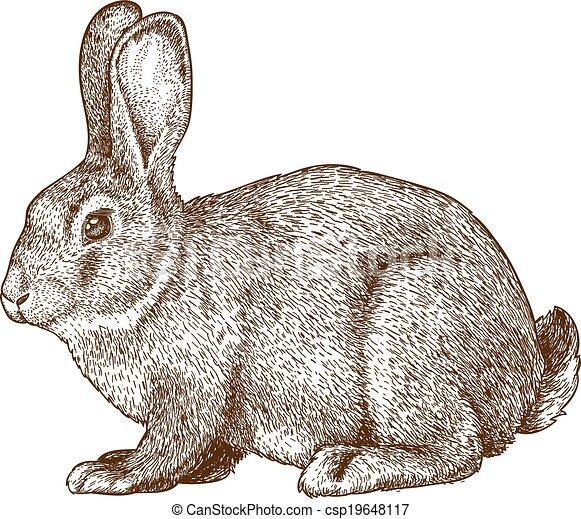 Vector grabado conejo - csp19648117