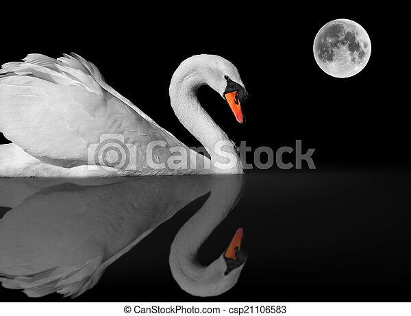 Graceful white swan under moonlight - csp21106583