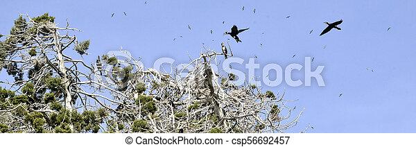 grad, golem, lago ilha, árvores, macedonia, prespa, pássaros, cormorants - csp56692457