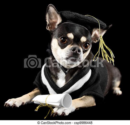 Best Graduation Cap Black Adorable Dog - graduation-dog-pictures_csp9986448  Gallery_167463  .jpg