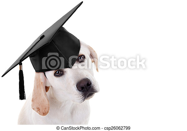 Graduation Graduate Dog - csp26062799
