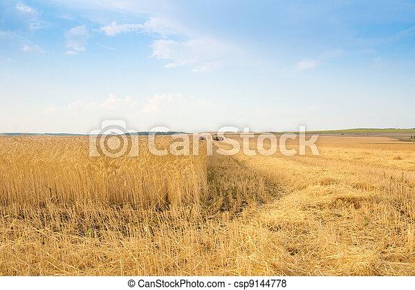 grain harvester combine in field  - csp9144778