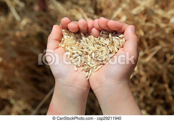 Grain of the wheat in hands of little girl - csp29211940