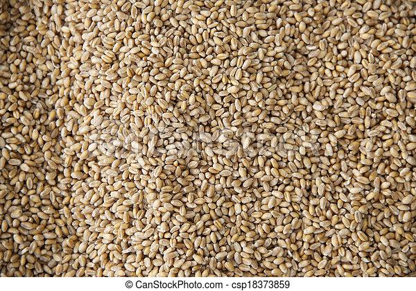 Grain - csp18373859