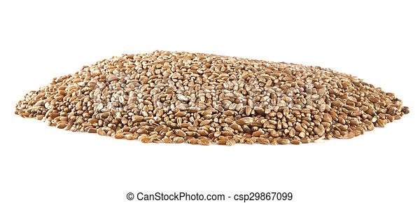 grain - csp29867099
