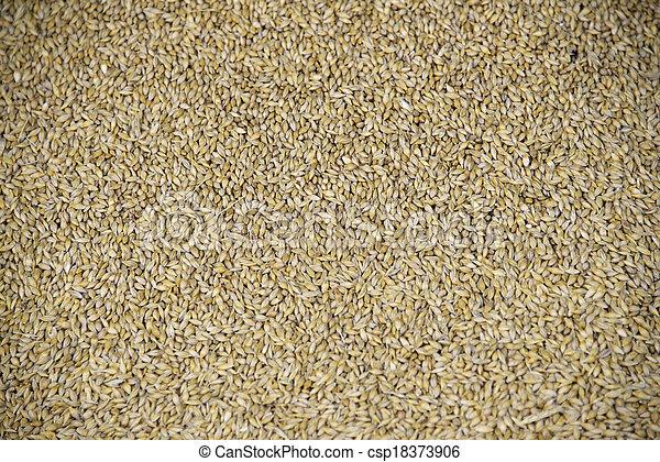 Grain - csp18373906