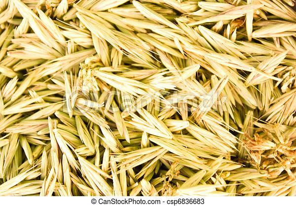 Grain - csp6836683