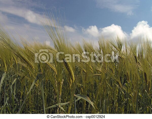 grainfield - csp0012924