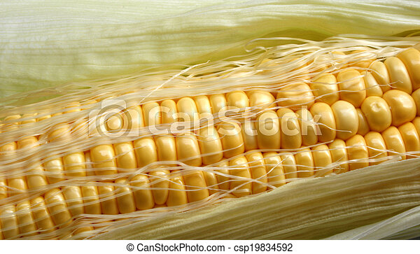 Grains of ripe corn - csp19834592