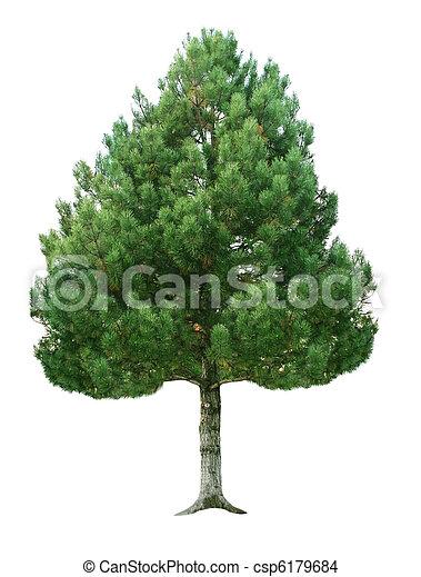 gran träd - csp6179684
