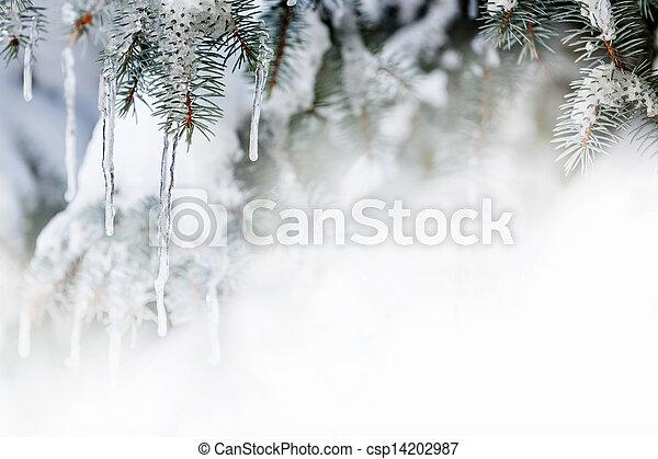 gran träd, vinter, bakgrund, istappar - csp14202987