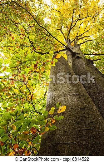 grand, angle, bas, arbres, vue - csp16814522
