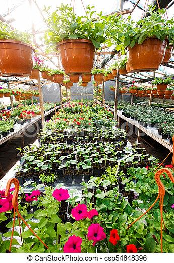 grand-angulaire, jardin, intérieur, photo., serre, fleurs, centre