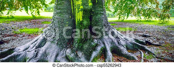 grand, après, arbre chêne, pluie - csp55262943