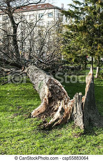 grand, baissé, après, arbre, orage - csp55883064