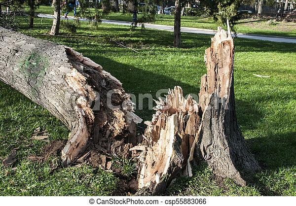 grand, baissé, après, arbre, orage - csp55883066